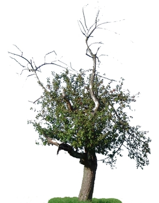 arcguide-bueroprofil-17002